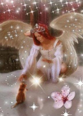 angel 11