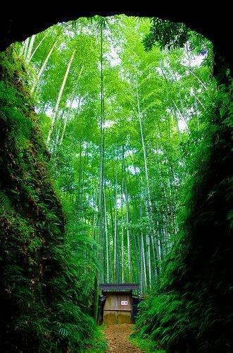 https://larutadedulcinea.com/wp-content/uploads/bambu-jardin-1.jpg