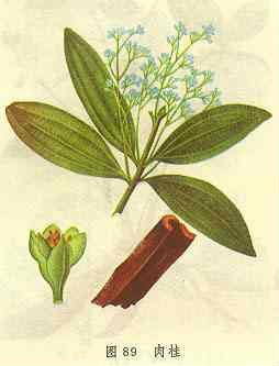 planta canela